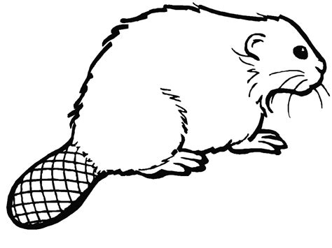 beaver color beaver coloring pages coloringpages1001