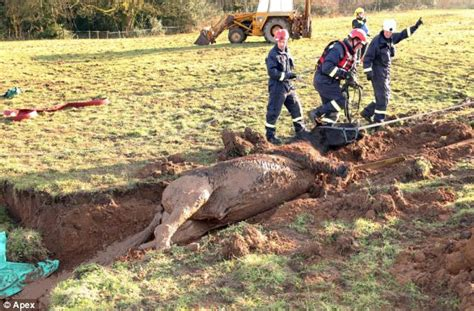 stuck ziehen save our stallion firefighters pull from