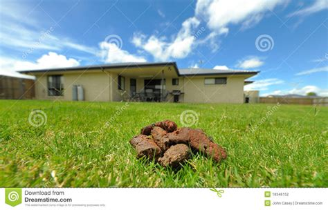 dog in backyard dog poo in backyard stock photography image 18346152