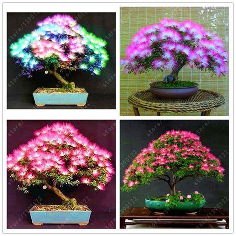 Benih Biji Wisteria Import 642 Best Bonsai Images On Gardening Beautiful