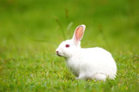 kumpulan gambar kelinci imut  lucu