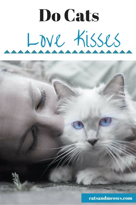 do dogs like kisses do cats like kisses cats and meows