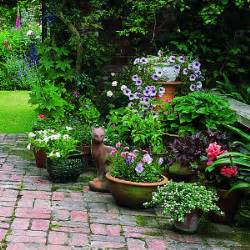 container gardening ideas for hanging flower baskets