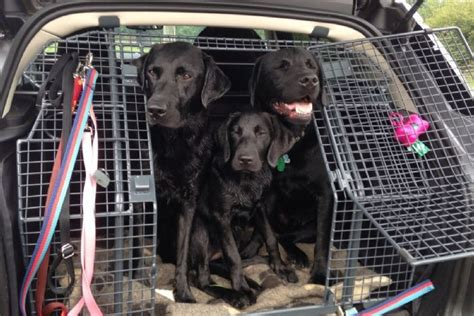 land rover setter dog waterproof protective cover for the luggage space range