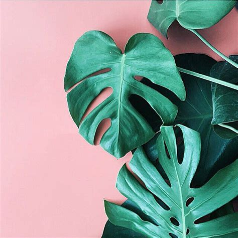 wallpaper pink leaves best 25 pink and green ideas on pinterest plant