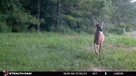 best trail best deer trail cameras reviews and comprehensive guide 2016