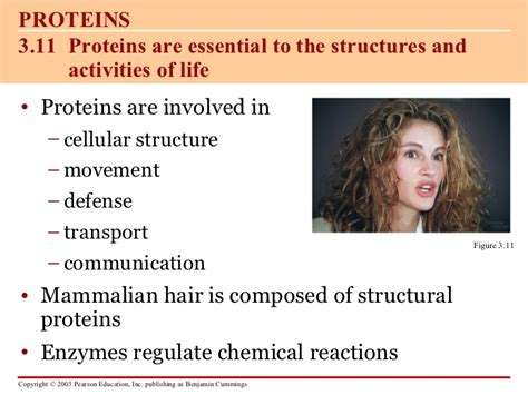carbohydrates lipids proteins and nucleic acids are carbohydrates proteins lipids and nucleic acids