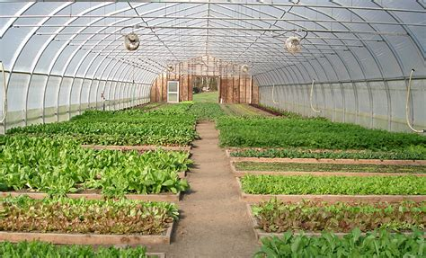 Big Greenhouses by Hobby Greenhouse Farm Large Greenhouses Greenhouses