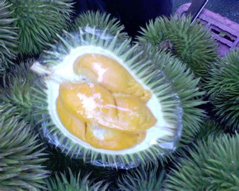 teratak senja durian hutan