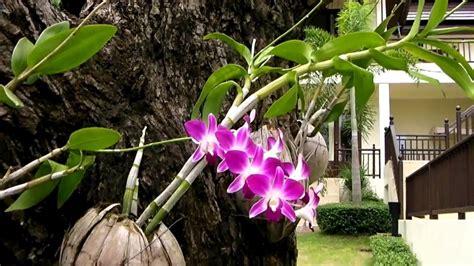 Pot Anggrek Tanah Liat cara merawat bunga anggrek agar rajin berbunga dengan