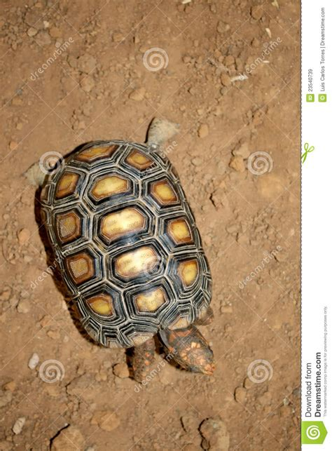 Turtle Top turtle top view stock image image of land footed animal