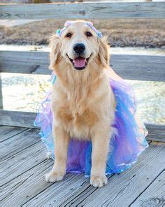 golden retriever onesie for adults tutu on tutus costumes and tulle