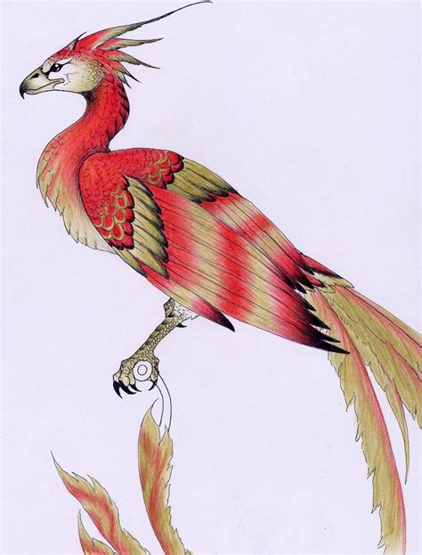 Fawkes the phoenix by verreaux on DeviantArt