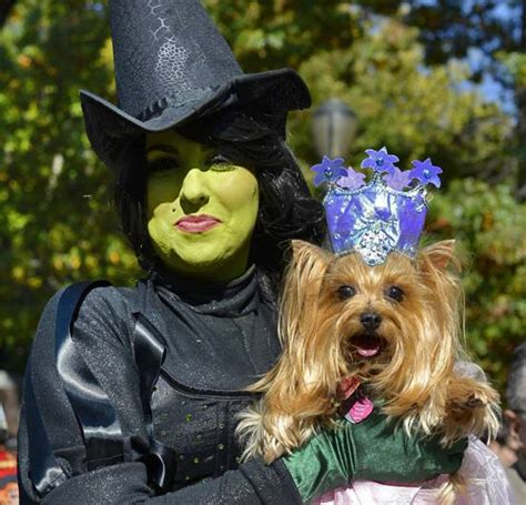 clever halloween dog costumes mnn mother nature network