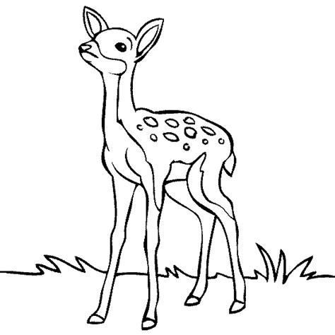 simple deer coloring pages baby deer coloring page coloring home