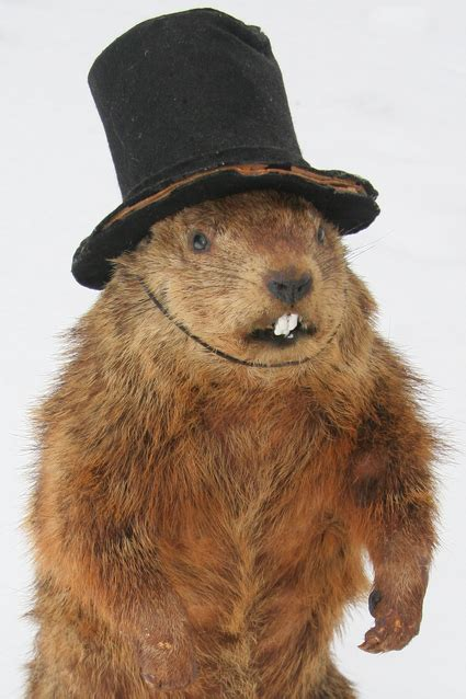 groundhog day hat we re all a mad here