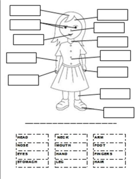 label the body parts worksheet worksheets for all