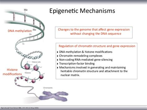 Remodeling App the role of dna methylation in complex diseases
