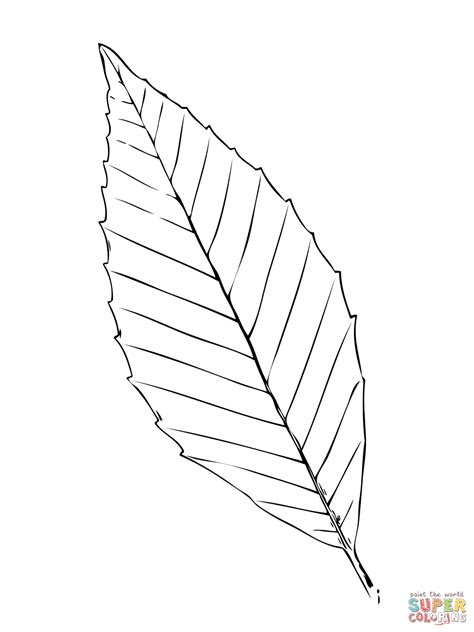 beech tree coloring page 301 moved permanently