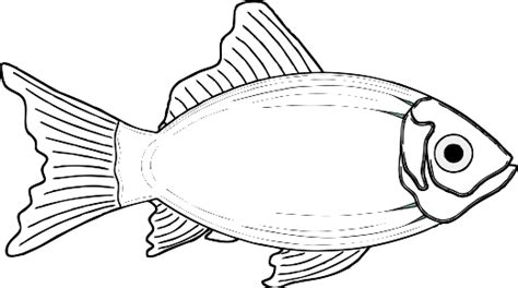 coloring pages of cod fish cod fish clip art sketch coloring page