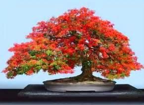 bonsai le le bonsai