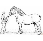 Pics Photos  Pictures Clydesdale Horse Coloring Page Of
