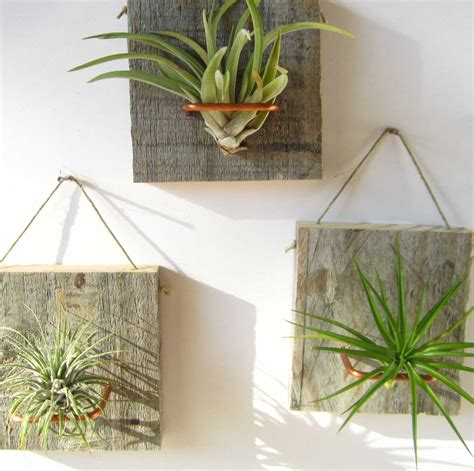 air plant wall holder set of three small form air plant and barn wood grab by