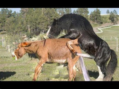 donkeys mating compilation donkeys breeding animals