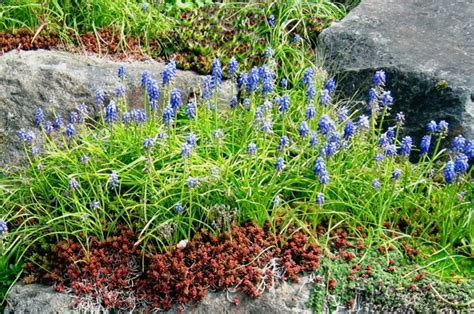 122 best images about landscaping with rocks on
