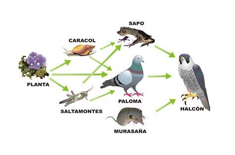 cadenas y redes troficas o alimentarias cadenas y redes alimentarias la protecci 211 n del medio