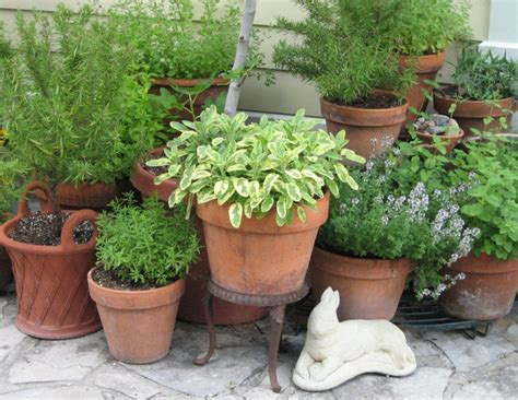 herb pots outdoor how to grow a container herb garden