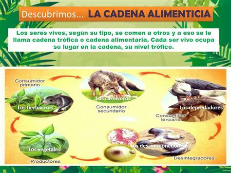 cadenas alimentarias ejemplos yahoo el mundo de los animales ppt descargar