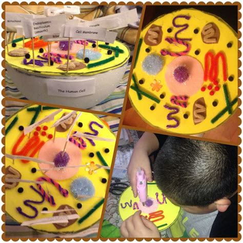 7th grade bangs ideas my nephew s 7th grade science 3d animal cell project