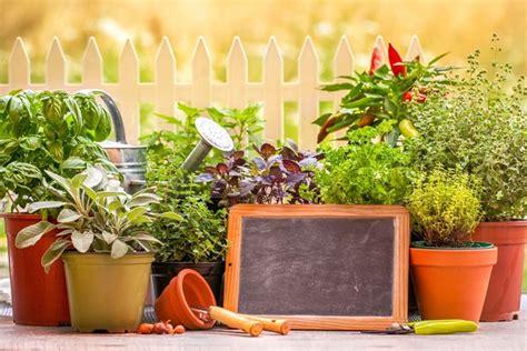 piante ornamentali da terrazzo piante per terrazzo piante da terrazzo quali piante
