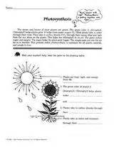 labeled diagram 3rd grade basic photosynthesis grade 2 use this printable to teach children about photosynthesis