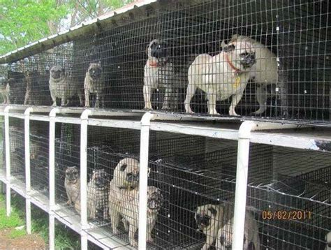 are puppy mills money talks in the fight for puppy mills