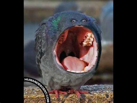 imagenes raras de animales animales raros youtube