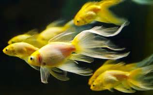 Colorful fishes wallpaper galaxy of entertainment