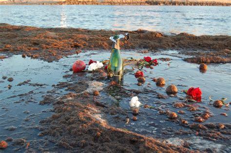 imagenes rosas en el mar fotos de rosas en el mar