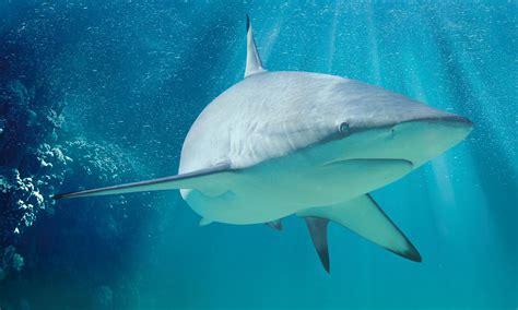 capitaneria porto messina messina avvistato squalo di 5 metri la capitaneria 171 fate
