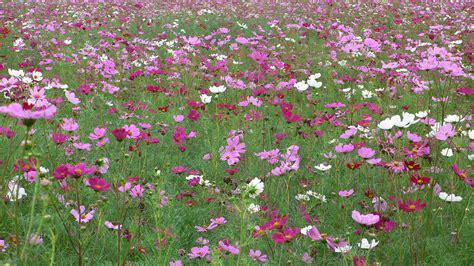 immagini di prati fioriti pin tante altre immagini da colorare di on