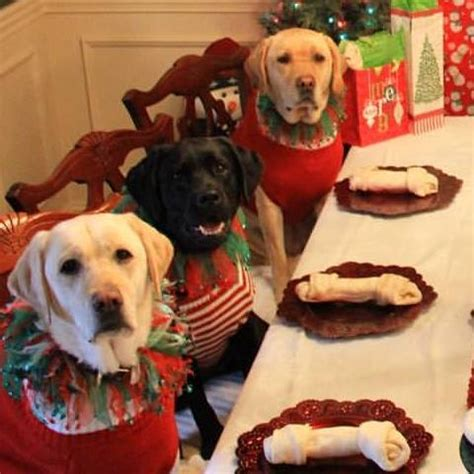 dogs at dinner table furr s dogs sitting around a dinner table won