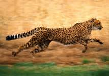 Russia Fastis 2018 Can Be As Fast As Cheetah