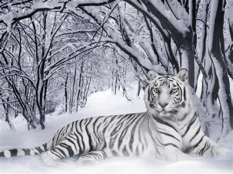 gambar harimau apick aw0x z
