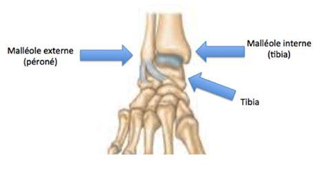 malleolo tibiale interno diff 233 rence malleole et peron 233 entorses et fractures