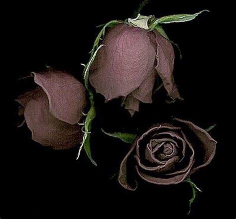 imagenes de flores goticas imagenes de flores goticas