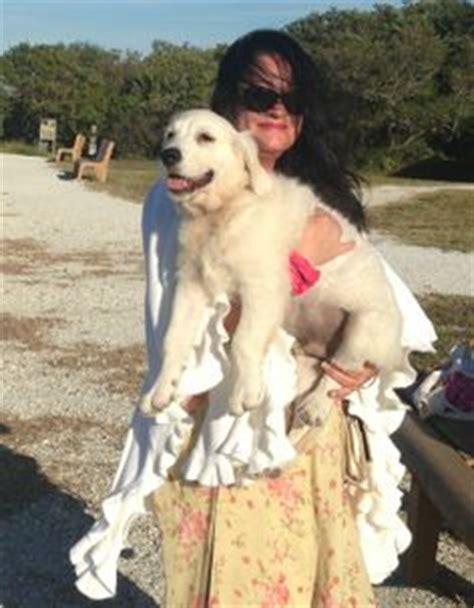 golden retriever puppies bradenton fl white golden retriever sson on white golden retrievers cool