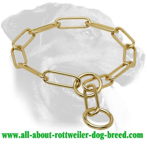 rottweiler fur order brass rottweiler choke collar behavior correction