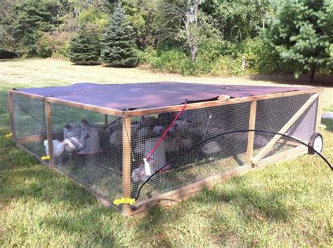 backyard chicken tractor tethering electric fence to chicken tractors backyard