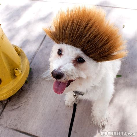 spiky hair dogs dog wig cat wig cushzilla ombre spiked bro wig for dogs
